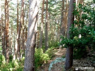 Parque Moncayo; Tarazona;Veruela; guia de senderismoparque natural andujar vias pecuarias comunidad